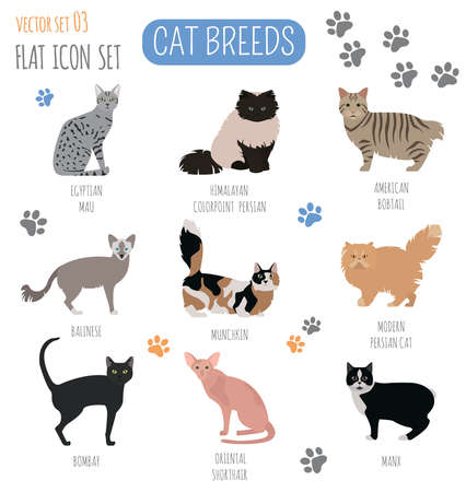 breeds: Cat breeds icon set flat style. Vector illustration