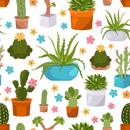 houseplants: Cactuses and succulents seamless pattern. Houseplants. Vector illustration