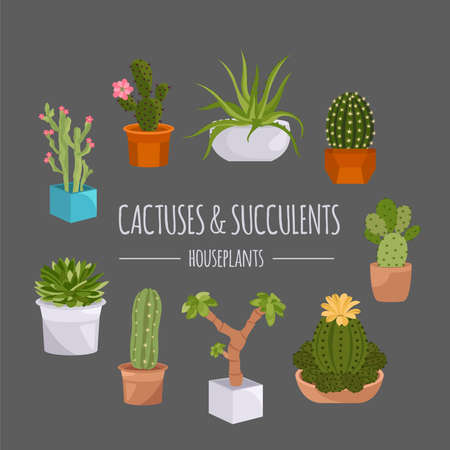 houseplants: Cactuses and succulents icon set. Houseplants. Vector illustration
