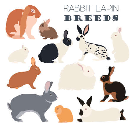 lionhead: Rabbit, lapin breed icon set. Flat design. Vector illustration