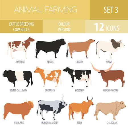 Cattle breeding farming. Cow, bulls breed icon set. Flat design. Vector illustration