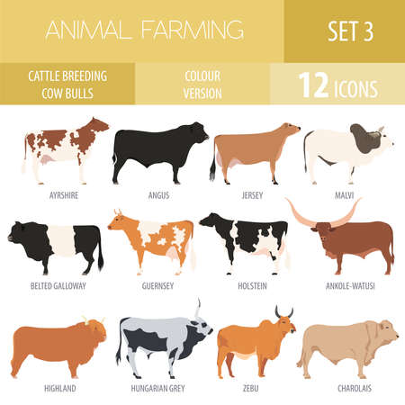 Cattle breeding farming. Cow, bulls breed icon set. Flat design. Vector illustration