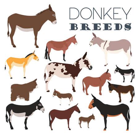 breeds: Donkey breeds icon set. Animal farming. Flat design. Vector illustration