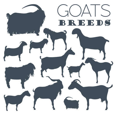 breeds: Goat breeds icon set. Animal farming. Flat design. Vector illustration Illustration