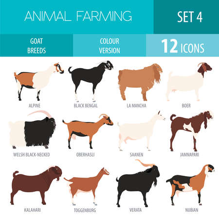 Goat breeds icon set. Animal farming. Flat design. Vector illustration Ilustração