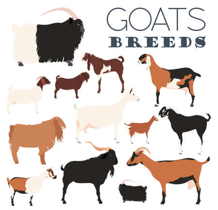 Goat breeds icon set. Animal farming. Flat design. Vector illustration Illustration