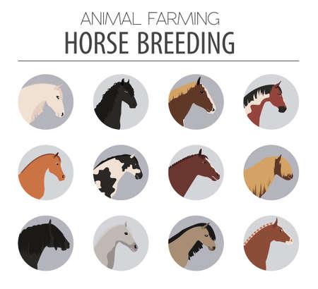 pet breeding: Horse breeding icon set. Farm animal. Flat design. Vector illustration Illustration