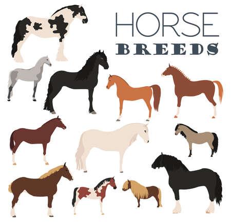 Horse breeding icon set. Farm animal. Flat design. Vector illustration Illustration
