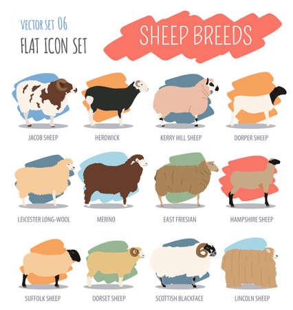 jacob: Sheep breed icon set. Farm animal. Flat design. Vector illustration