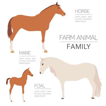 Caballo agricultura plantilla de infografía. Semental, yegua, potro familia. Diseño plano. ilustración vectorial