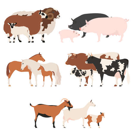 pet breeding: Farm animall family collection. Cattle, sheep, pig, horse, goat icon set. Flat design. Vector illustration Illustration
