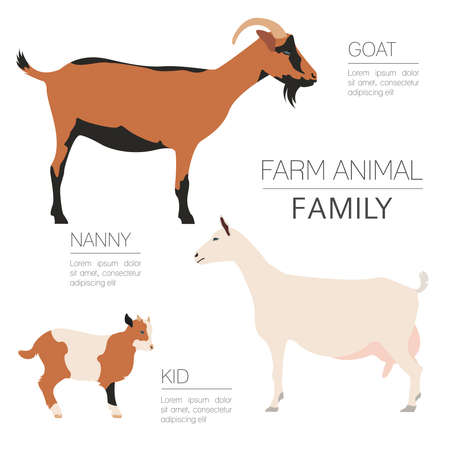 Goat farming infographic template. Animall family. Flat design. Vector illustration Illustration