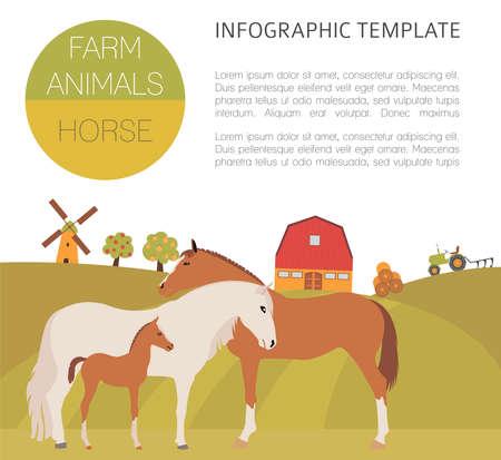 foal: Horse farming infographic template. Stallion, mare, foal family. Flat design. Vector illustration Illustration