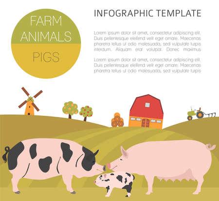 sow: Pig farming infographic template. Hog, sow, pig family. Flat design. Vector illustration