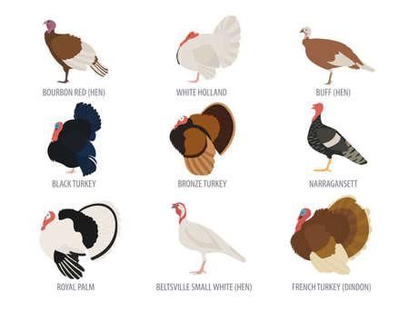 Élevage de volailles. Turquie multiplie icon set. Design plat. Vector illustration