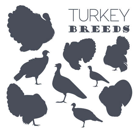Poultry farming. Turkey breeds icon set. Flat design. Vector illustration