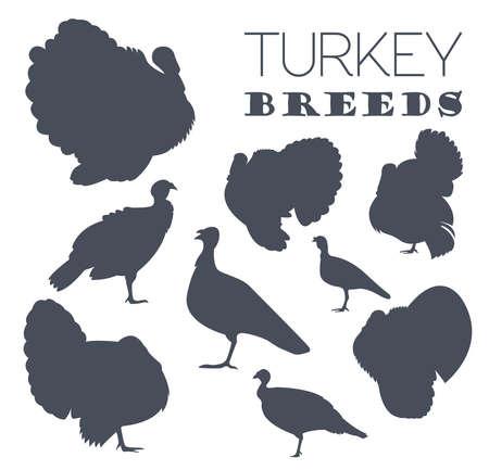 breeds: Poultry farming. Turkey breeds icon set. Flat design. Vector illustration