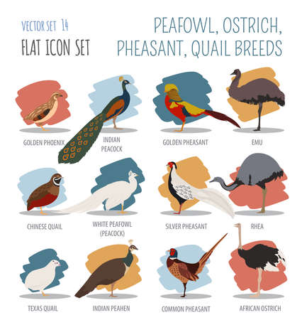 breeds: Poultry farming. Peafowl, ostrich, pheasant, quail breeds icon set. Flat design. Vector illustration