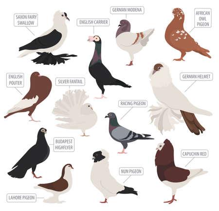 Geflügelhaltung. Pigeon Rassen Symbol gesetzt. Flaches Design. Vektor-Illustration