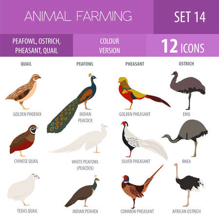 rhea: Poultry farming. Peafowl, ostrich, pheasant, quail breeds icon set. Flat design. Vector illustration