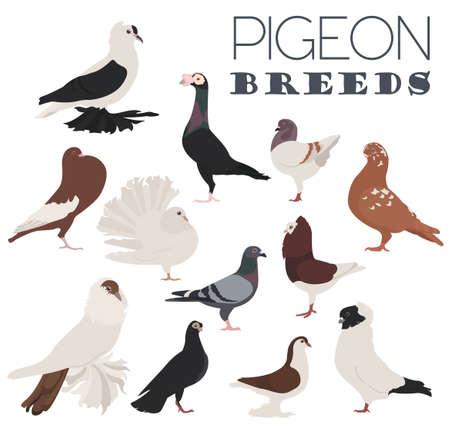 breeds: Poultry farming. Pigeon breeds icon set. Flat design. Vector illustration Illustration