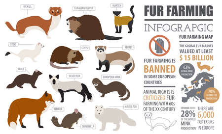 marten: Fur farming infographic template. Flat design. Vector illustration Illustration