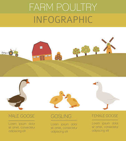 Poultry farming. Goose family isolated on white. Flat design. Vector illustration