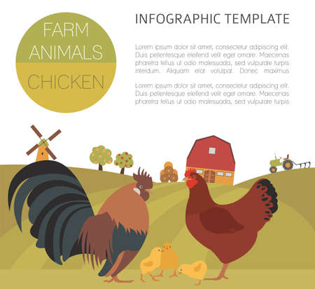 Poultry farming. Chicken family isolated on white. Flat design. Vector illustration