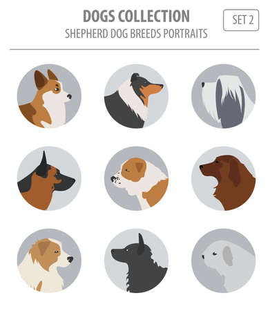 Shepherd dog breeds, sheepdogs collection isolated on white. Flat style. Vector illustration