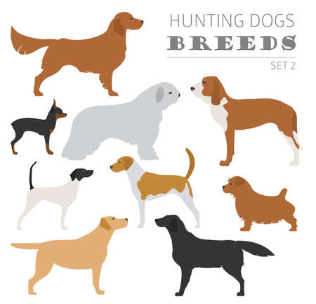 kerry blue terrier: Hunting dog breeds collection isolated on white. Flat style. Vector illustration