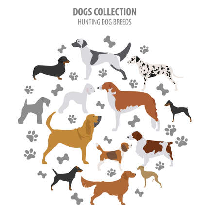 Hunting dog breeds collection isolated on white. Flat style. Vector illustration