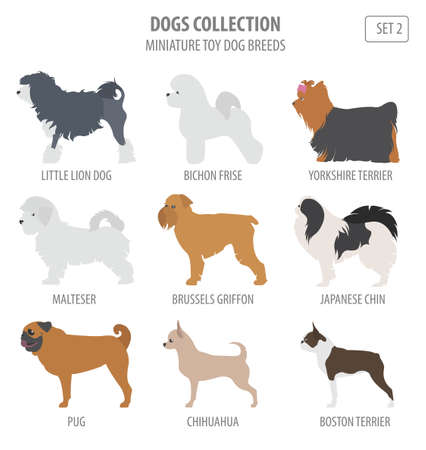 Toy dog breeds collection isolated on white. Flat style. Vector illustration Illustration