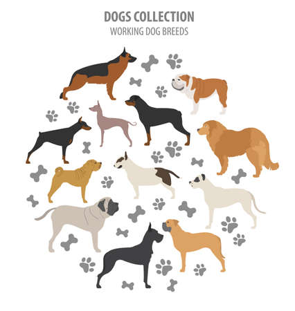 akita: Working (watching) dog breeds collection isolated on white. Flat style. Vector illustration