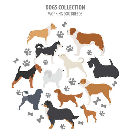 Working (watching) dog breeds collection isolated on white. Flat style. Vector illustration