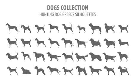 drathaar: Hunting dog breeds collection isolated on white. Flat style. Vector illustration