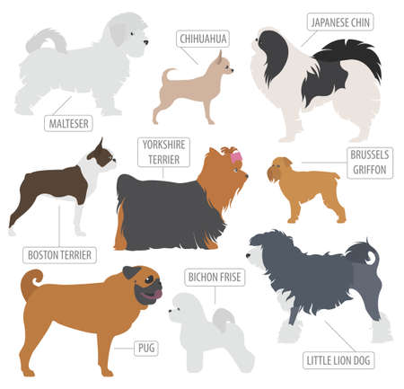 charles: Miniature toy dog breeds collection isolated on white. Flat style. Vector illustration