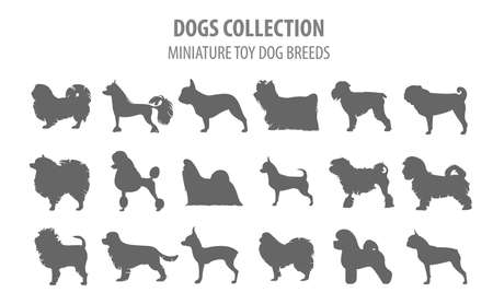 Miniature toy dog breeds collection isolated on white. Flat style. Vector illustration