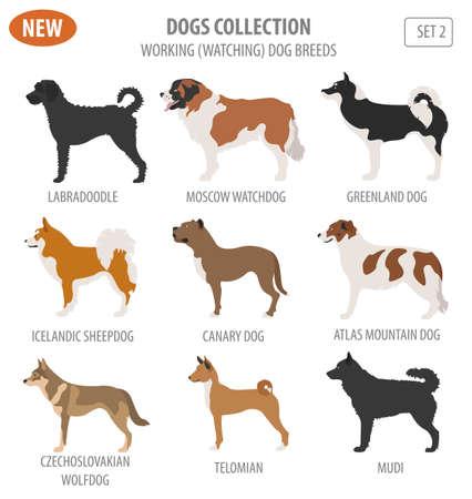 Working, watching dog breeds,  set icon isolated on white . Flat style. Vector illustration Illusztráció