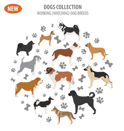 Circular working, watching dog breeds,  set icon isolated on white . Flat style. Vector illustration
