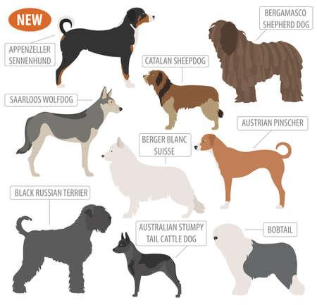 beautiful shepherd dog breeds, sheepdogs set icon isolated on white . Flat style. Vector illustration