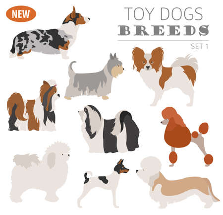 Illustration of a  toy dog breeds, set icon isolated on white . Flat style. Vector illustration