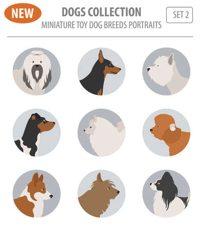 pembroke welsh corgi: Illustration of a  breeds, set icon isolated on white . Flat style. Vector illustration