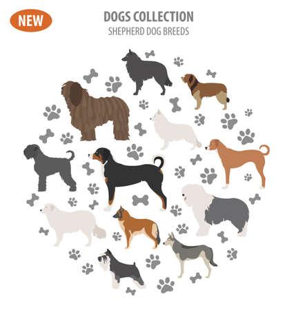 Illustration of a Shepherd dog breeds, sheepdogs set icon isolated on white . Flat style. Vector illustration Illustration