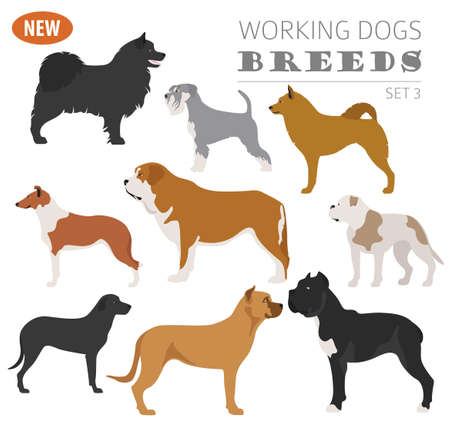 Illustration of a cool Working, watching dog breeds,  set icon isolated on white . Flat style. Vector illustration Illustration
