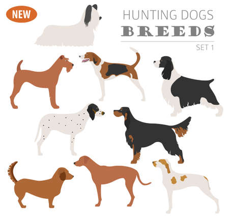 Hunting dog breeds set icon isolated on white . Flat style. Vector illustration