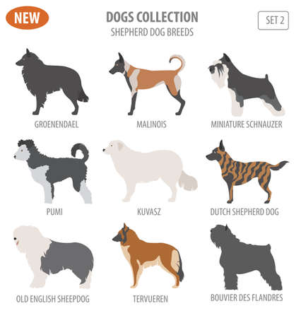 Illustration of a  cute Shepherd dog breeds, sheepdogs set icon isolated on white . Flat style. Vector illustration