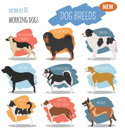 Working, watching dog breeds,  set icon isolated on white . Flat style. Vector illustration Illustration