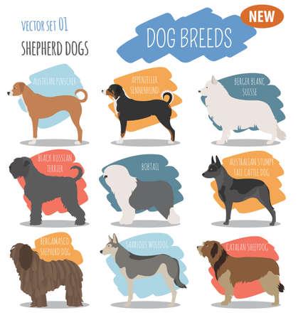 Shepherd dog breeds, sheepdogs set icon isolated on white . Flat style. Vector illustration