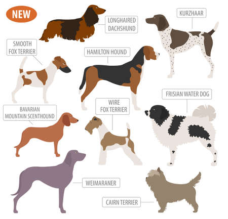 Hunting dog breeds set icon isolated on white . Flat style. Vector illustration