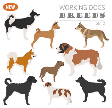 Illustration of a  beautiful Working, watching dog breeds,  set icon isolated on white . Flat style. Vector illustration